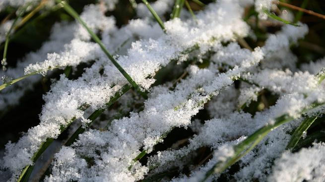 Синоптики обещают заморозки от -1 до -4 в субботу в Ленобласти